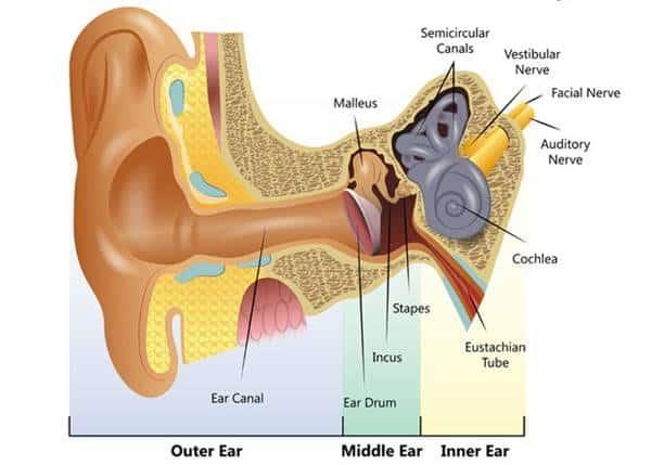 कान की संरचना blog image