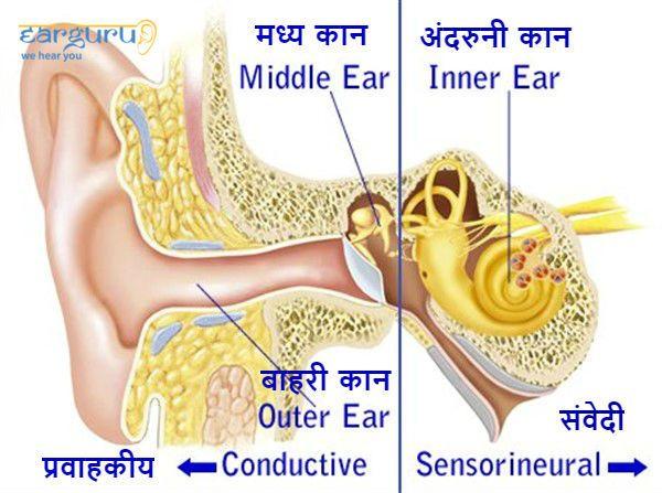 बाहरी, मध्य और अंदरुनी कान की संरचना blog image