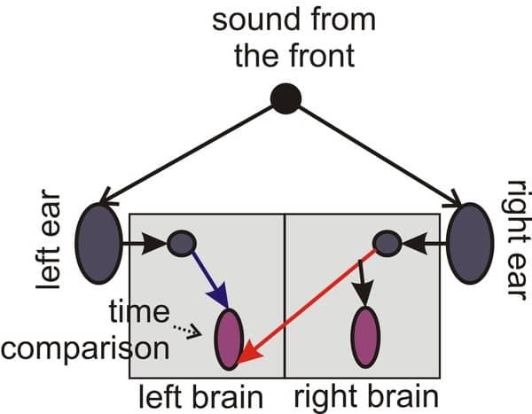 Diagram Localisation of sound EarGuru Ear Health blog