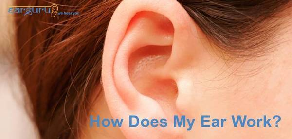 How Does My Ear Work
