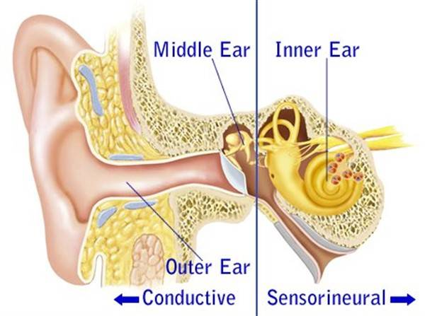 Outer, Middle & Inner Ear Structure diagram blog image