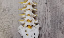 Chiropractic Fun Facts